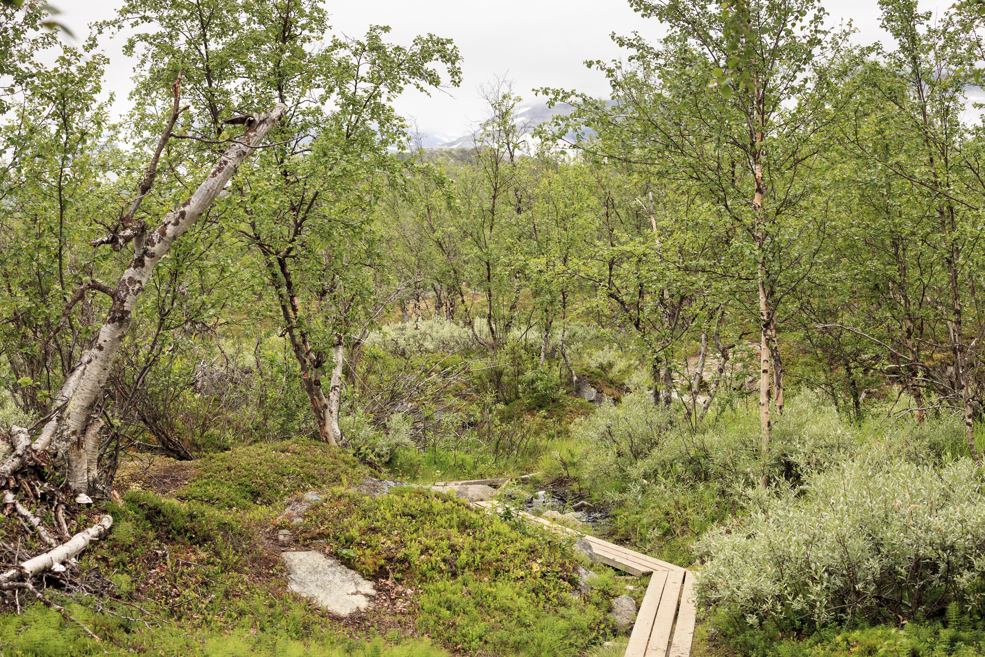Bohlenweg im Abisko Nationalpark,©Markus Proske—Canon EOS 5D Mark II, EF70-300mm f/4-5.6L IS USM, 70mm, 1/80s, Blende 8, ISO 200