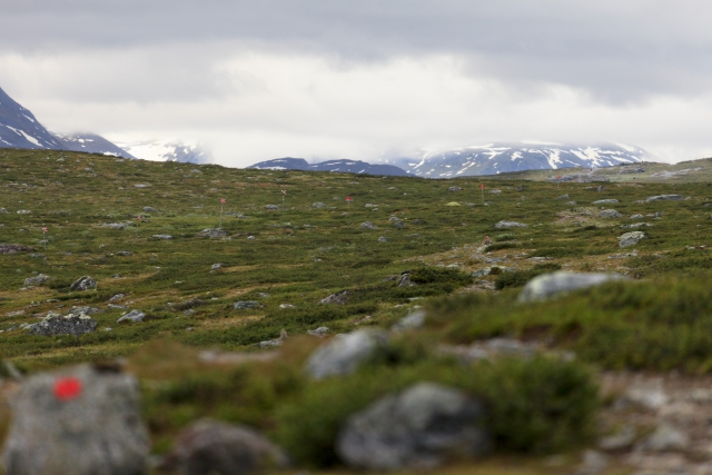 Unser Weg Richtung Alesjaure, hier verläuft annähernd parallel auch der Winterweg (mit Andreaskreuzen markiert),©Markus Proske—Canon EOS 5D Mark II, EF70-300mm f/4-5.6L IS USM, 300mm, 1/125s, Blende 5.6, ISO 400