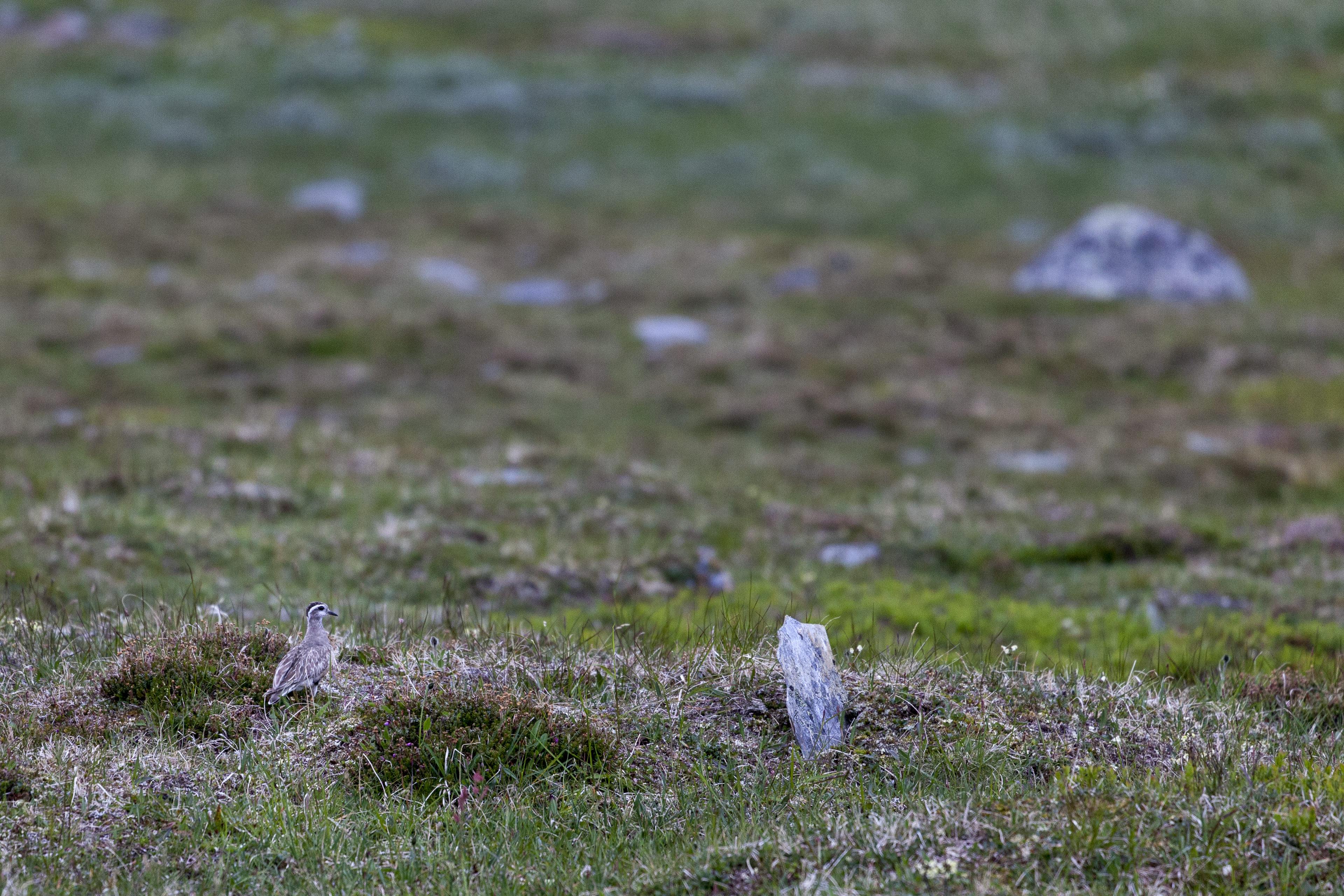 Gut getarnter schwedischer Vogel,©Markus Proske—Canon EOS 5D Mark II, EF70-300mm f/4-5.6L IS USM, 300mm, 1/320s, Blende 5.6, ISO 800