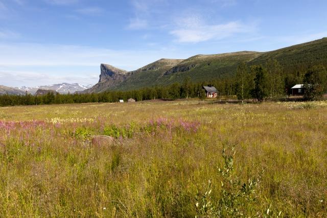 Blumenwiese in Aktse mit dem Skierffe im Hintergrund,©Markus Proske—Canon EOS 5D Mark II, EF16-35mm f/4L IS USM, 25mm, 1/250s, Blende 11, ISO 200