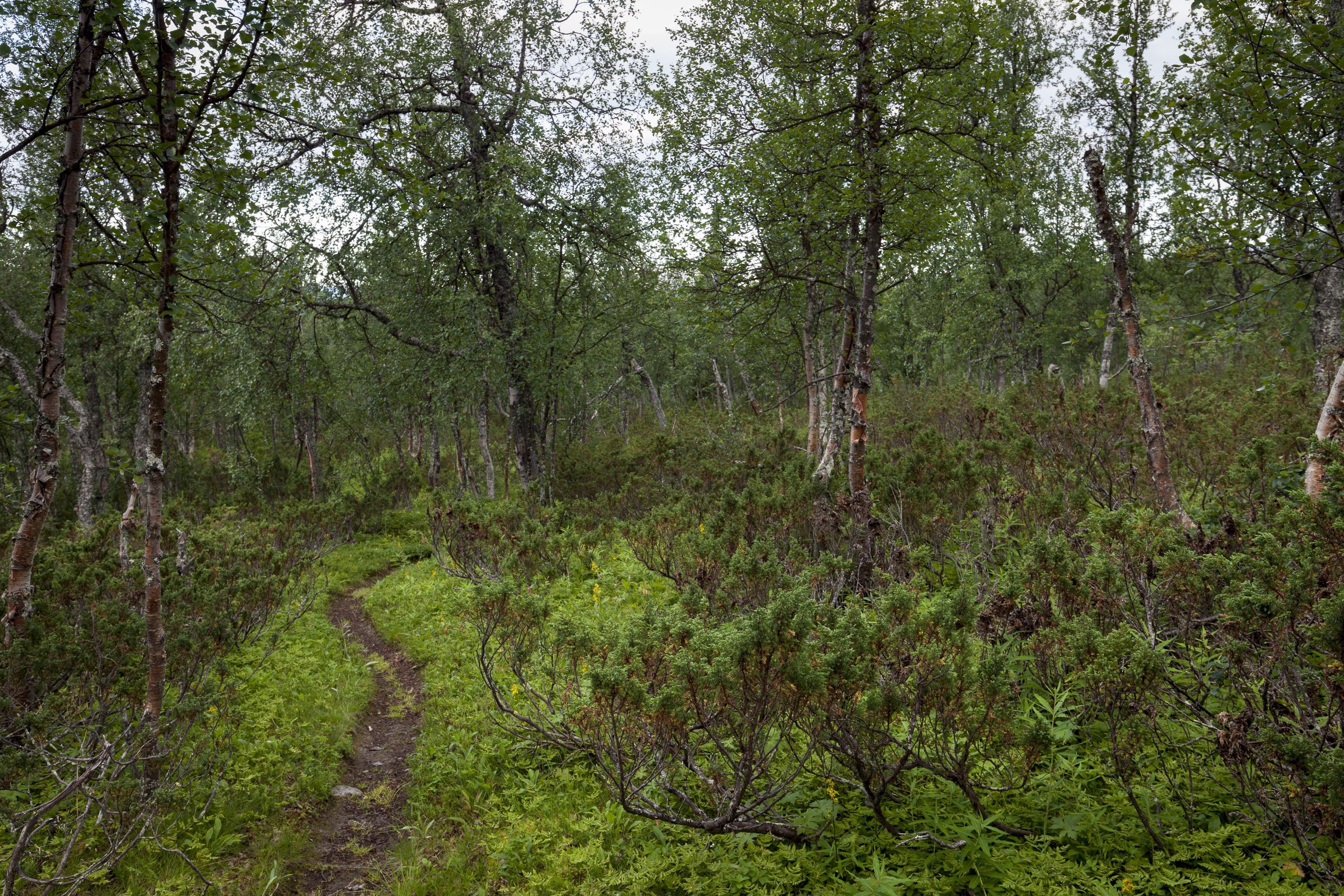 Frische Farben nach dem Regen,©Markus Proske—Canon EOS 5D Mark II, EF16-35mm f/4L IS USM, 28mm, 1/25s, Blende 8, ISO 400