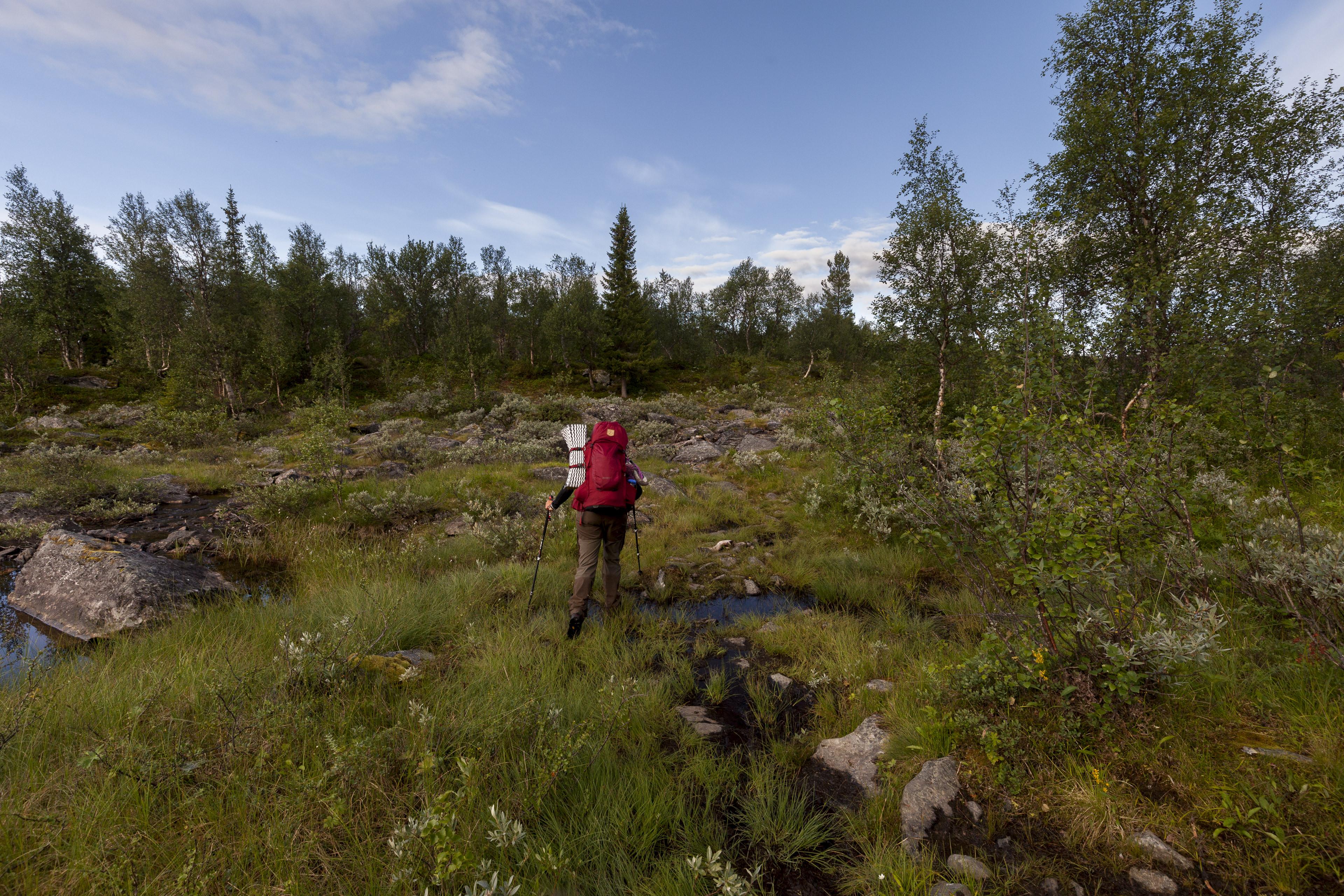 Mit großen Schritten durch den Sumpf,©Markus Proske—Canon EOS 5D Mark II, EF16-35mm f/4L IS USM, 16mm, 1/160s, Blende 8, ISO 400