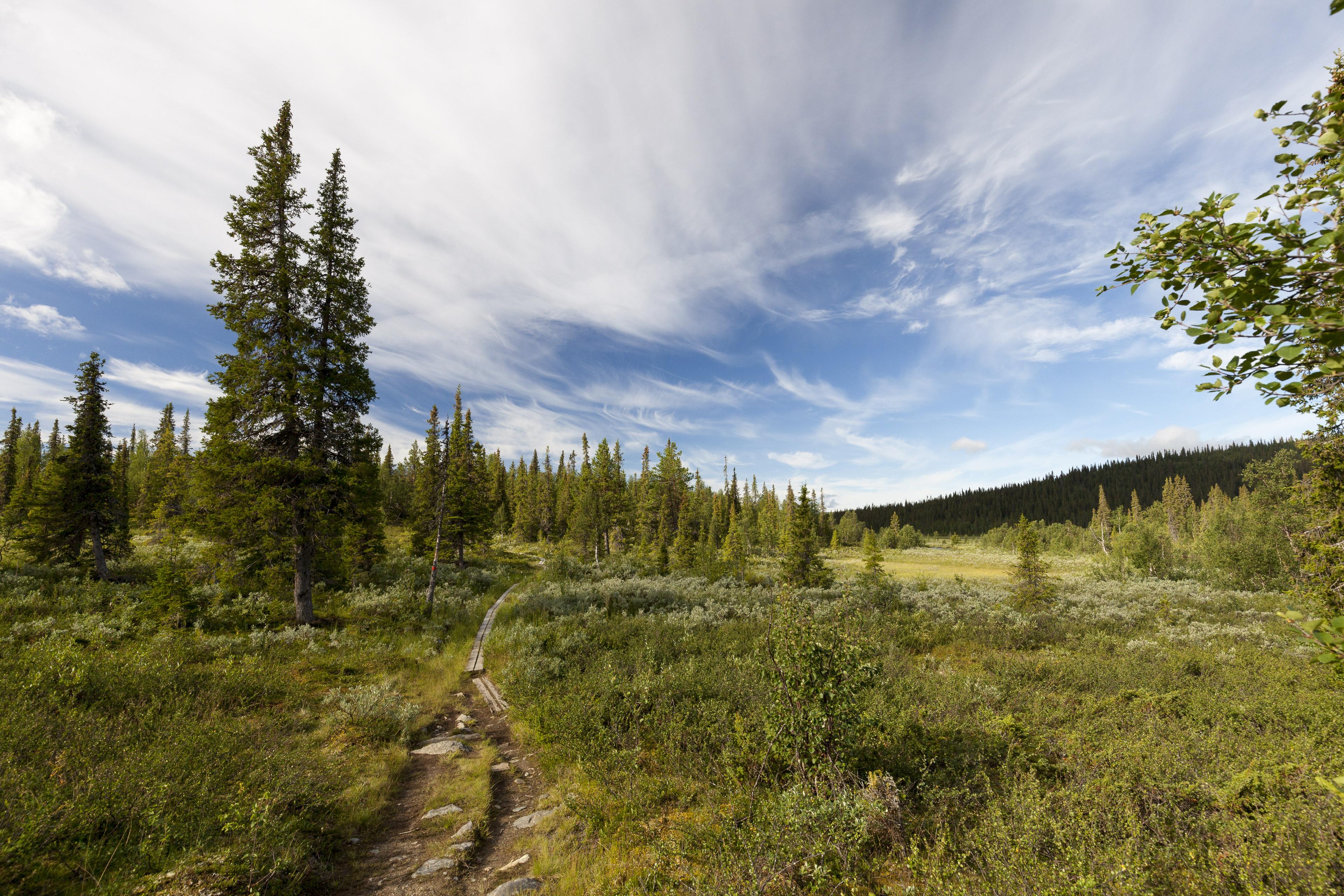 Durch den Wald nach Kvikkjokk,©Markus Proske—Canon EOS 5D Mark II, EF16-35mm f/4L IS USM, 16mm, 1/400s, Blende 8, ISO 400