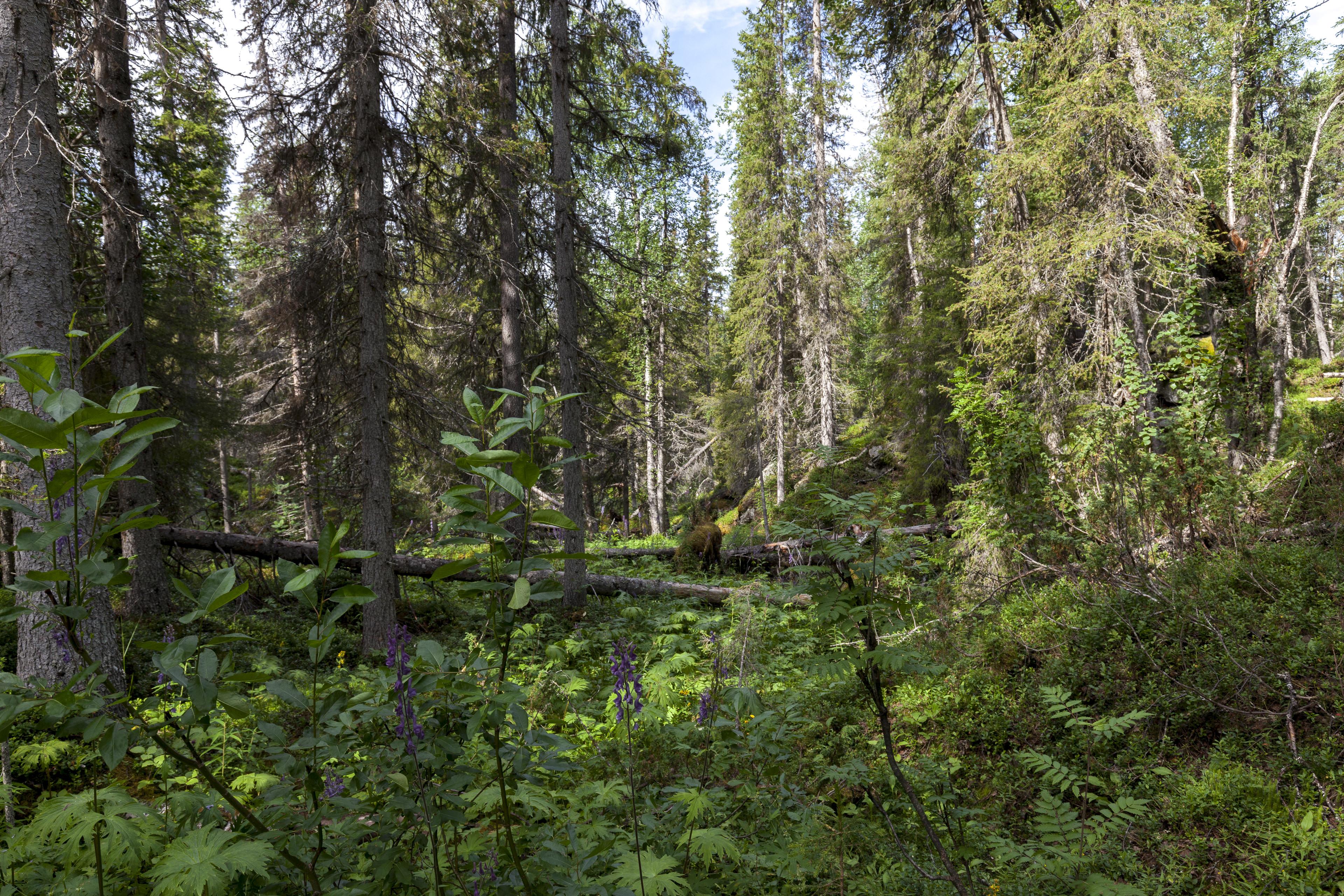 (Ur)Wald,©Markus Proske—Canon EOS 5D Mark II, EF16-35mm f/4L IS USM, 24mm, 1/100s, Blende 8, ISO 400
