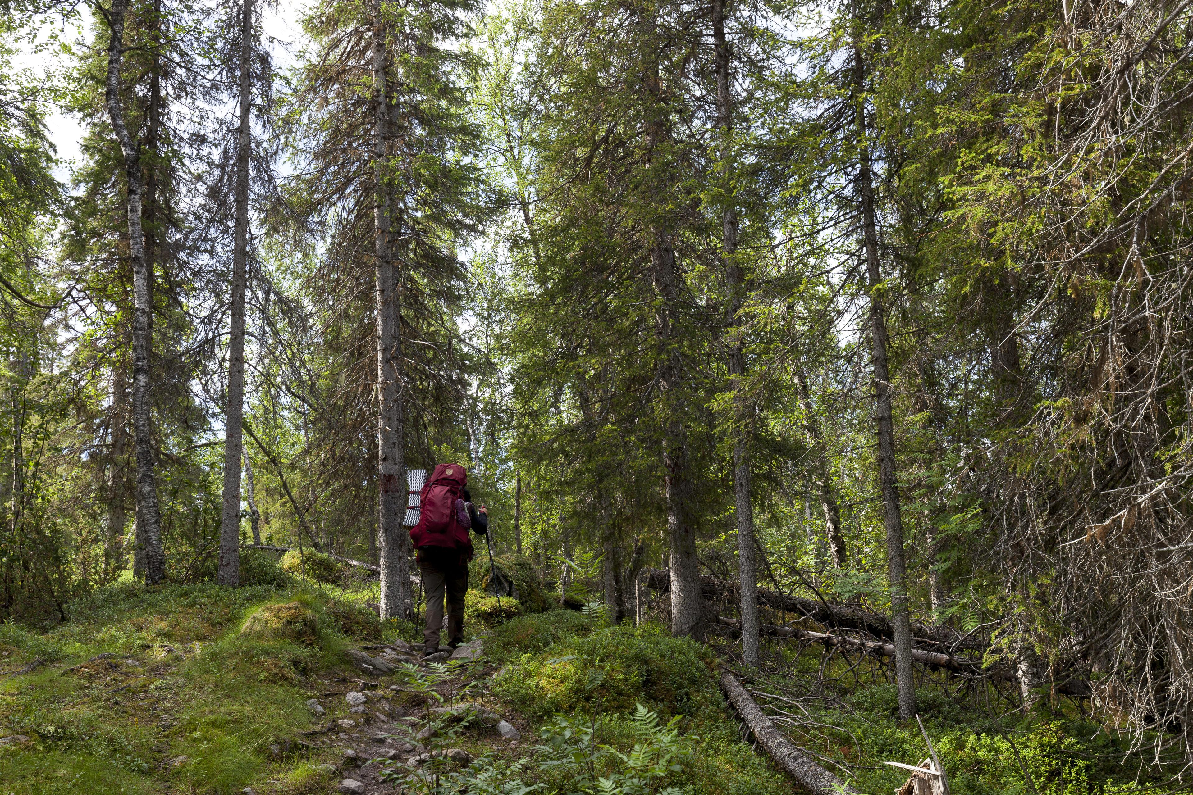 Durch Wald und über Hügel,©Markus Proske—Canon EOS 5D Mark II, EF16-35mm f/4L IS USM, 35mm, 1/80s, Blende 8, ISO 400
