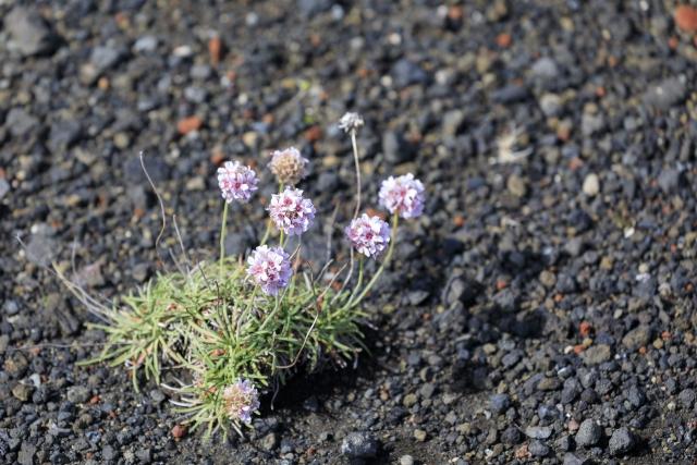 Vegetation in der Lavawüste,©Markus Proske—Canon EOS 5D Mark IV, EF70-300mm f/4-5.6L IS USM, 207mm, 1/800s, Blende 5.6, ISO 400