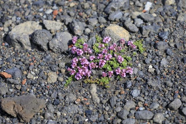 Vegetation in der Lavawüste,©Markus Proske—Canon EOS 5D Mark IV, EF70-300mm f/4-5.6L IS USM, 207mm, 1/1000s, Blende 5.6, ISO 400