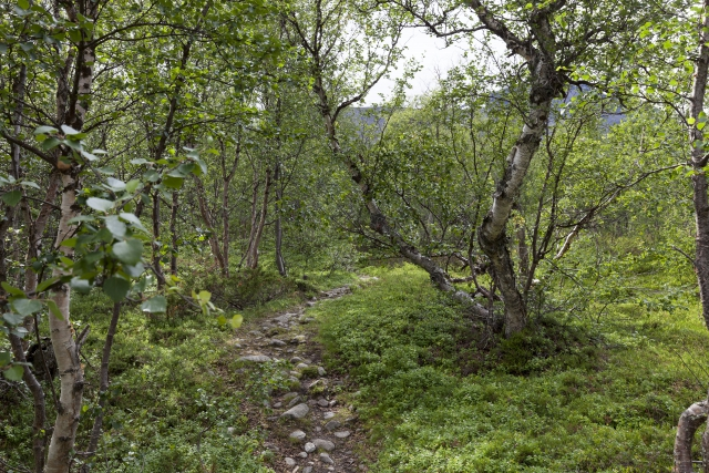 Der Beginn eines langen Aufstiegs durch den Birkenwald,©Markus Proske—Canon EOS 5D Mark II, EF16-35mm f/4L IS USM, 35mm, 1/40s, Blende 8, ISO 200