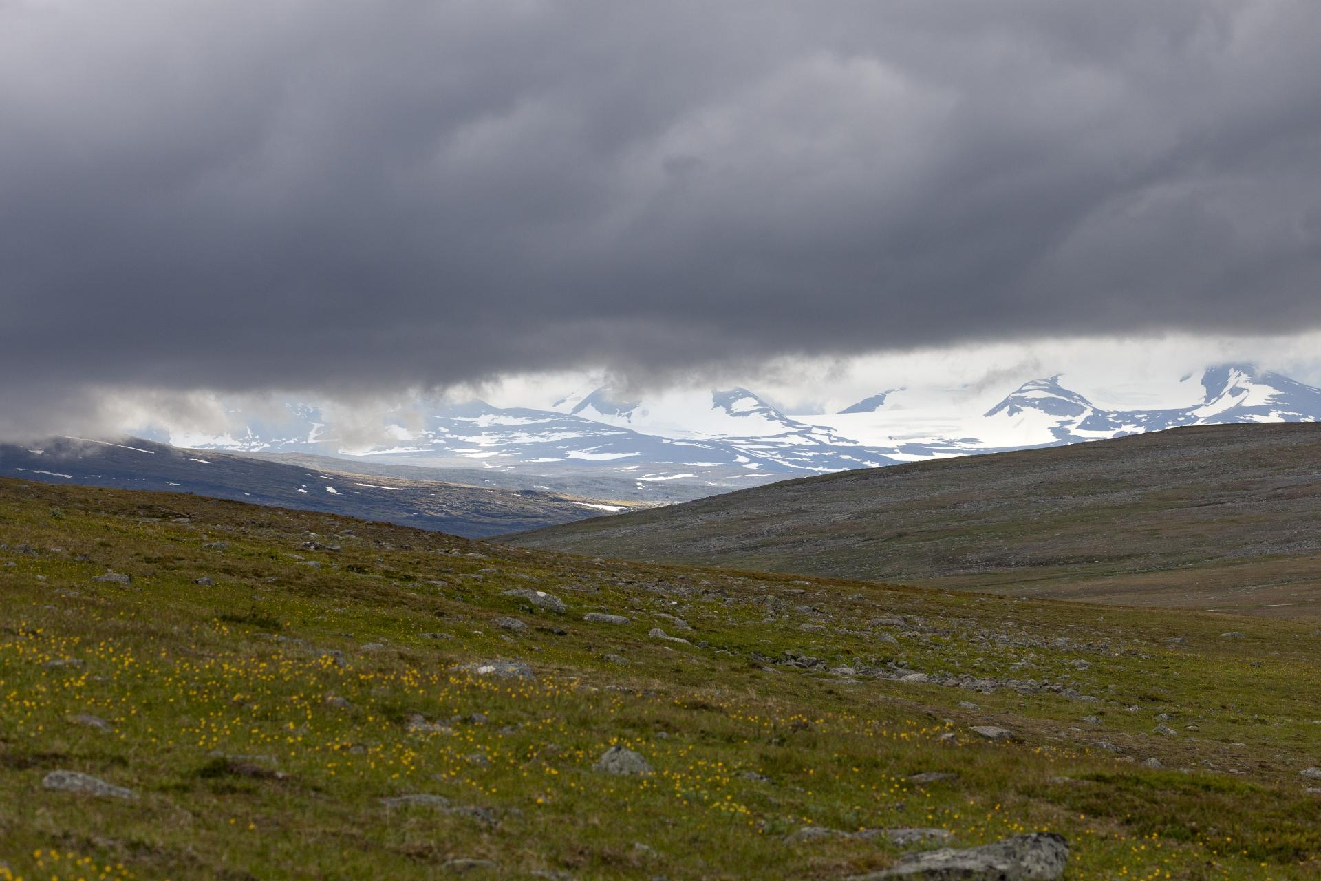 In der Ferne die schneebedeckten Gipfel des Sarek