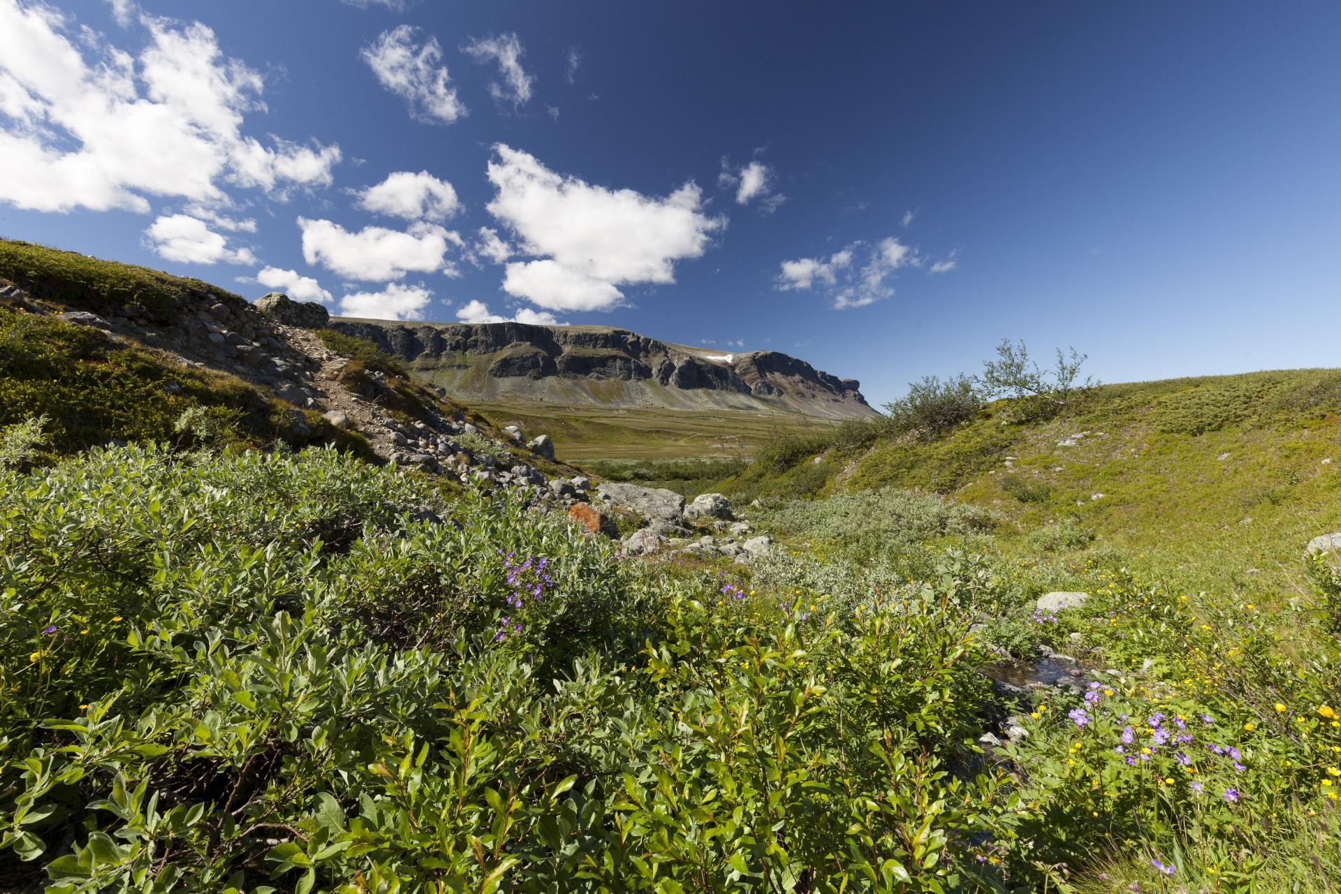 Reichhaltige Vegetation an geschützteren Plätzen