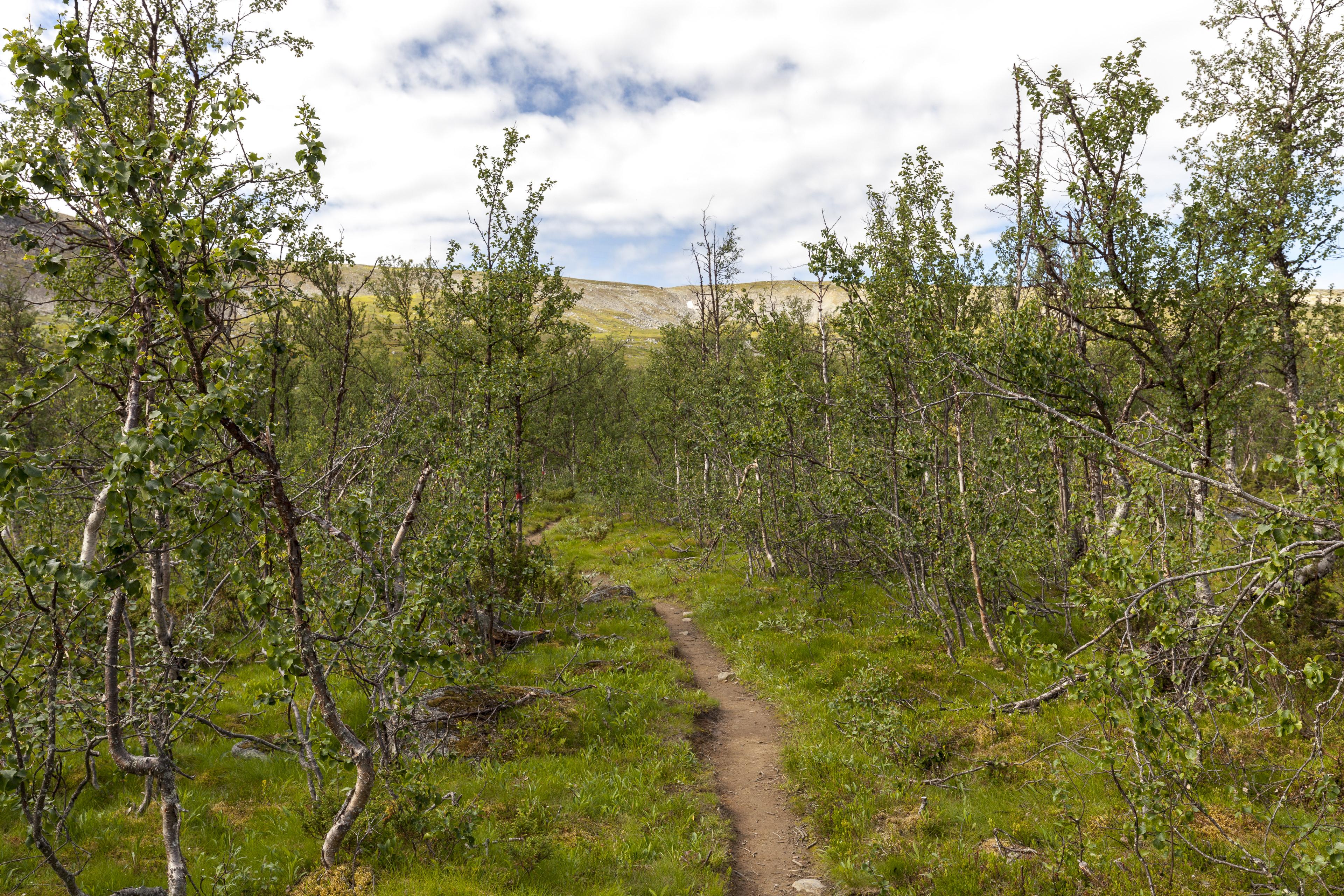 Der Weg führt durch den Birkenwald,©Markus Proske—Canon EOS 5D Mark II, EF16-35mm f/4L IS USM, 35mm, 1/125s, Blende 8, ISO 200