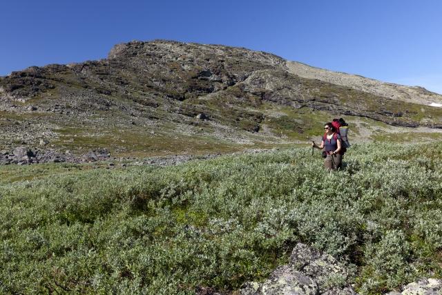 Elisabeth wieder einmal im Weidegestrüpp,©Markus Proske—Canon EOS 5D Mark II, EF16-35mm f/4L IS USM, 35mm, 1/160s, Blende 11, ISO 200