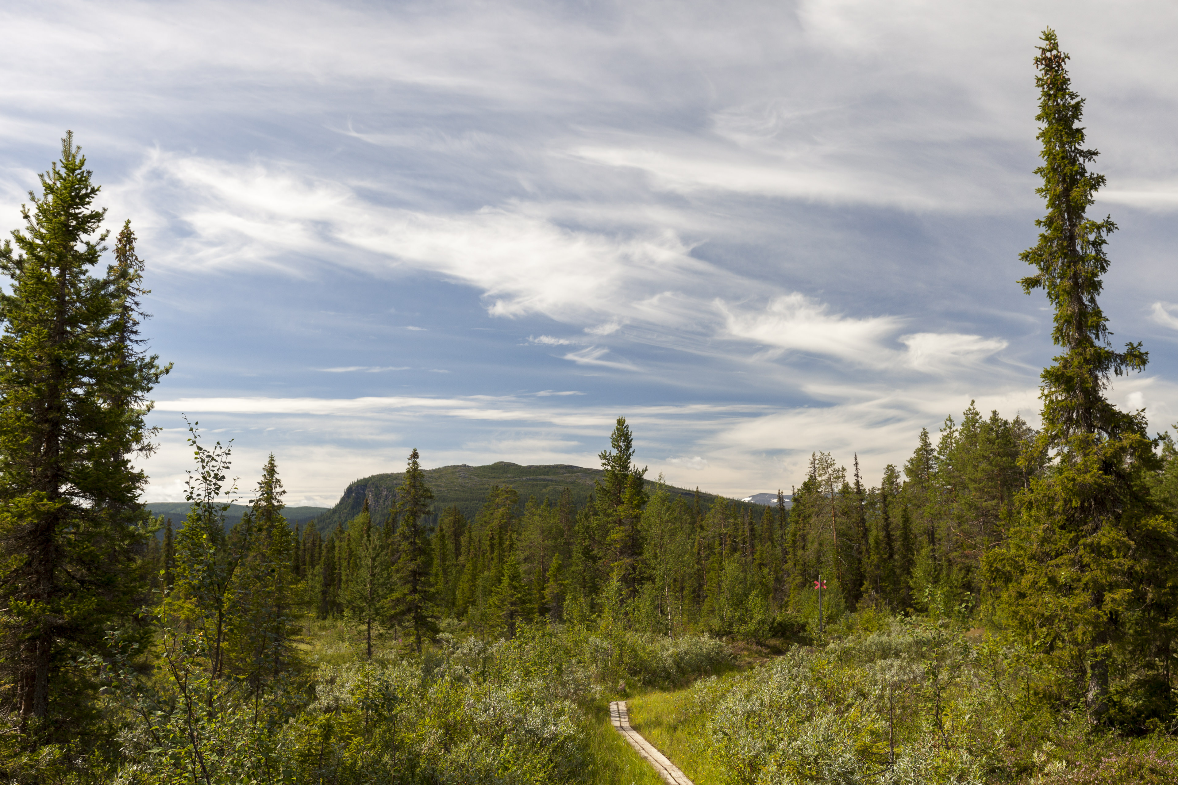Durch den Wald nach Kvikkjokk, © Markus Proske — Canon EOS 5D Mark II, EF16-35mm f/4L IS USM, 35mm, 1/200s, Blende 8, ISO 200