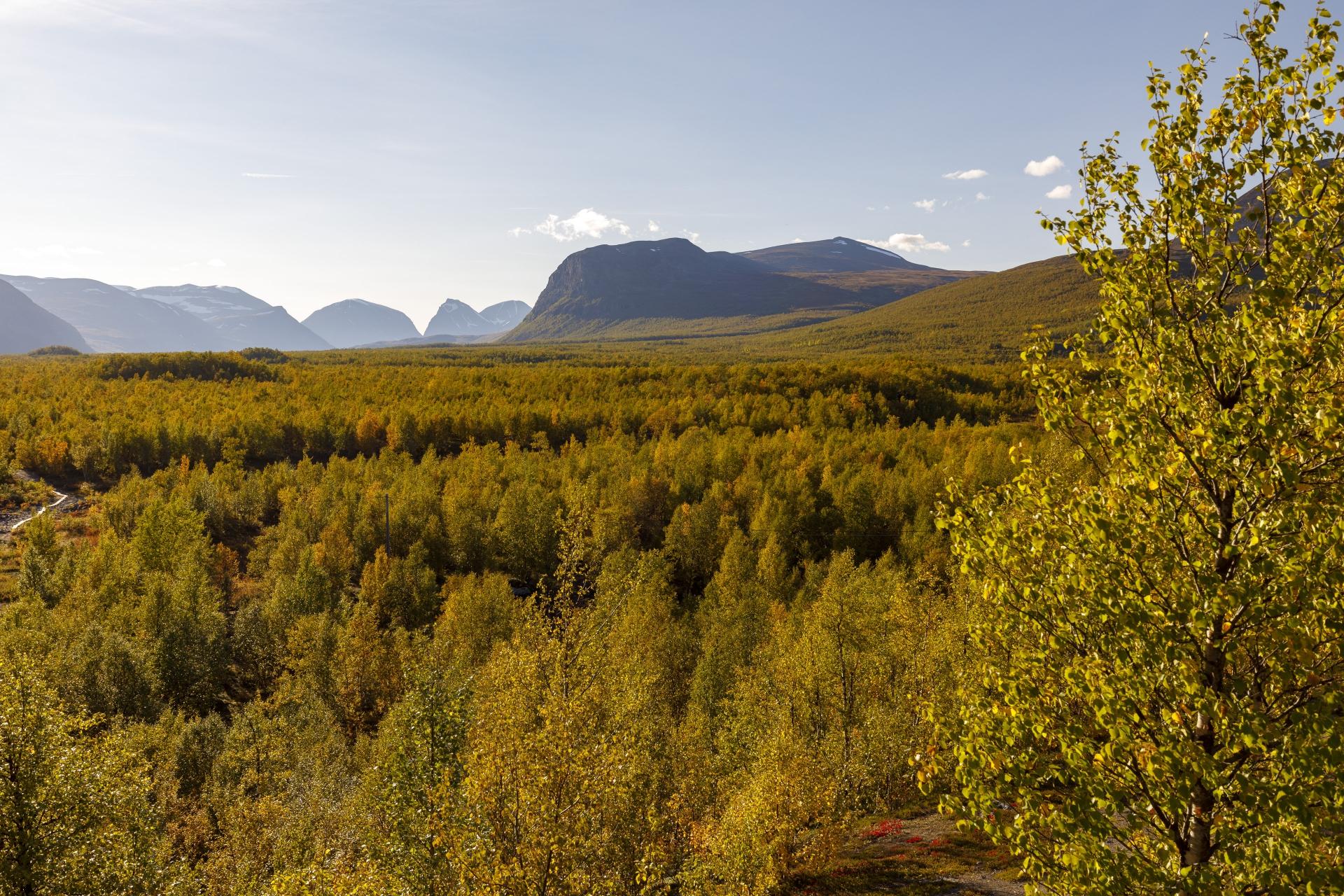 Blick nach Westen, der scharfe, V-förmige Einschnitt, da gehen wir übermorgen vorbei und linkerhand um den runden Berg Sinničohkka (1704m) herum
