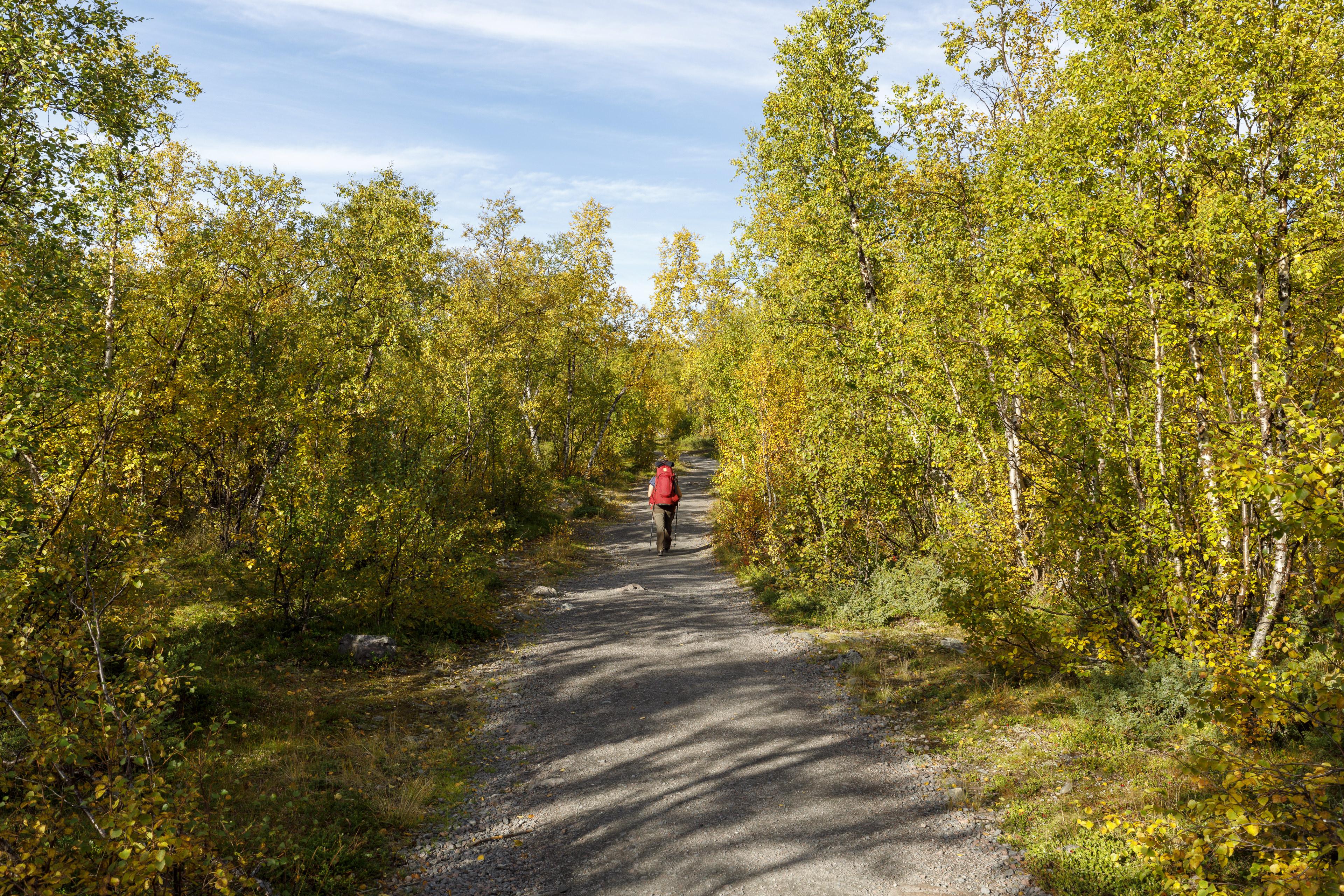 Elisabeth auf dem breiten Weg durch den Birkenwald,©Markus Proske—Canon EOS 5D Mark IV, EF16-35mm f/4L IS USM, 35mm, 1/100s, Blende 8, ISO 200