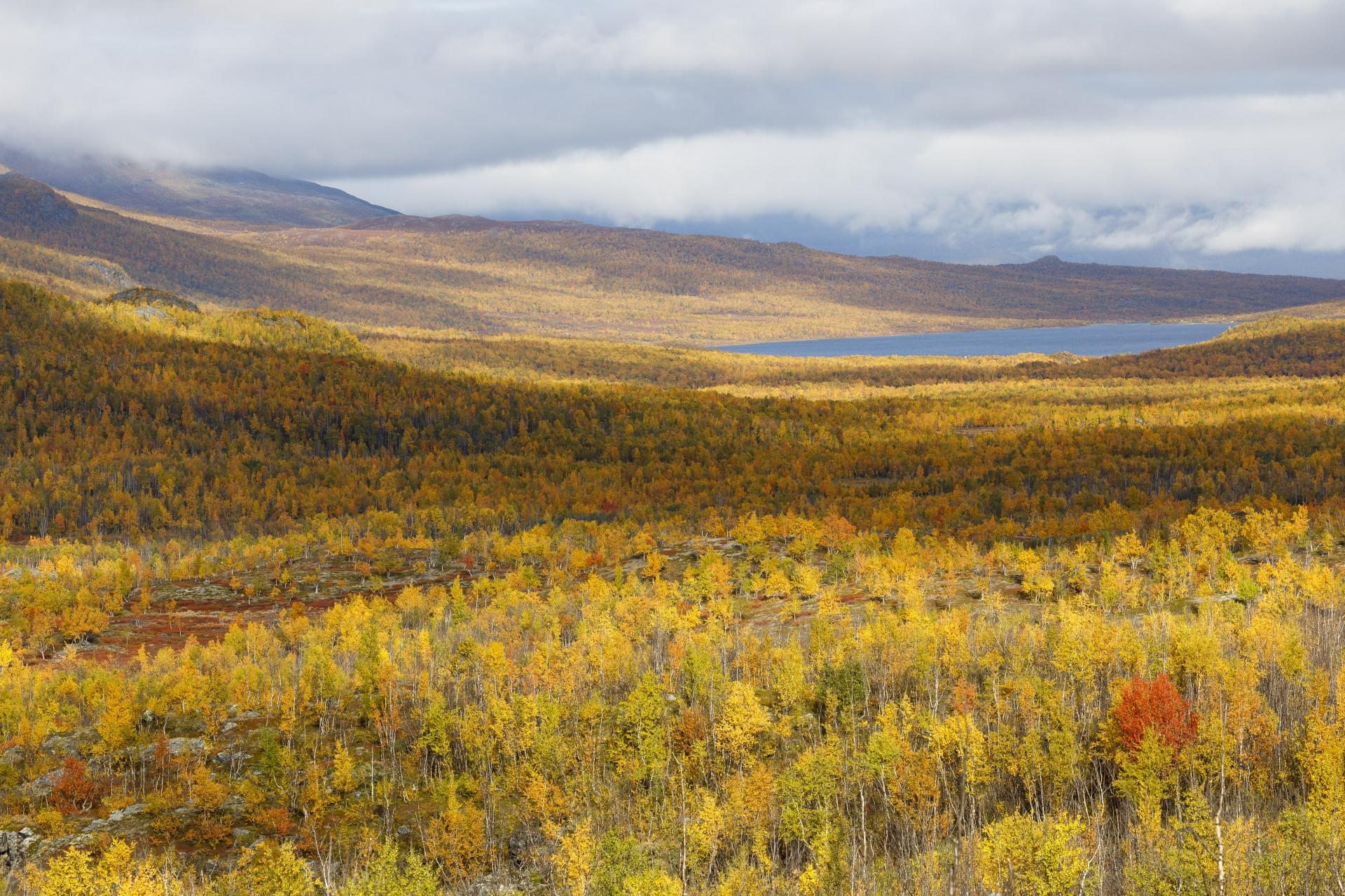 Ábeskojávri (Abiskojaure), fotografiert von der Sami-Siedlung Rovvidievvá