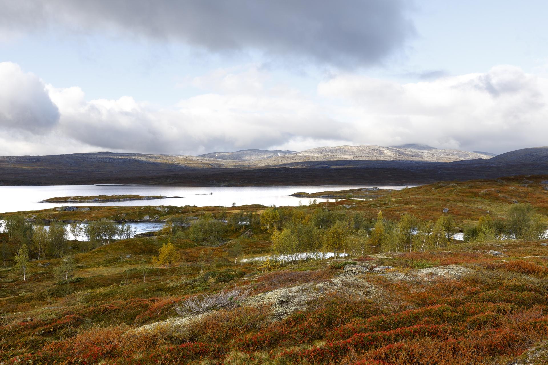 Gränsleden beim Sårgåjávrre