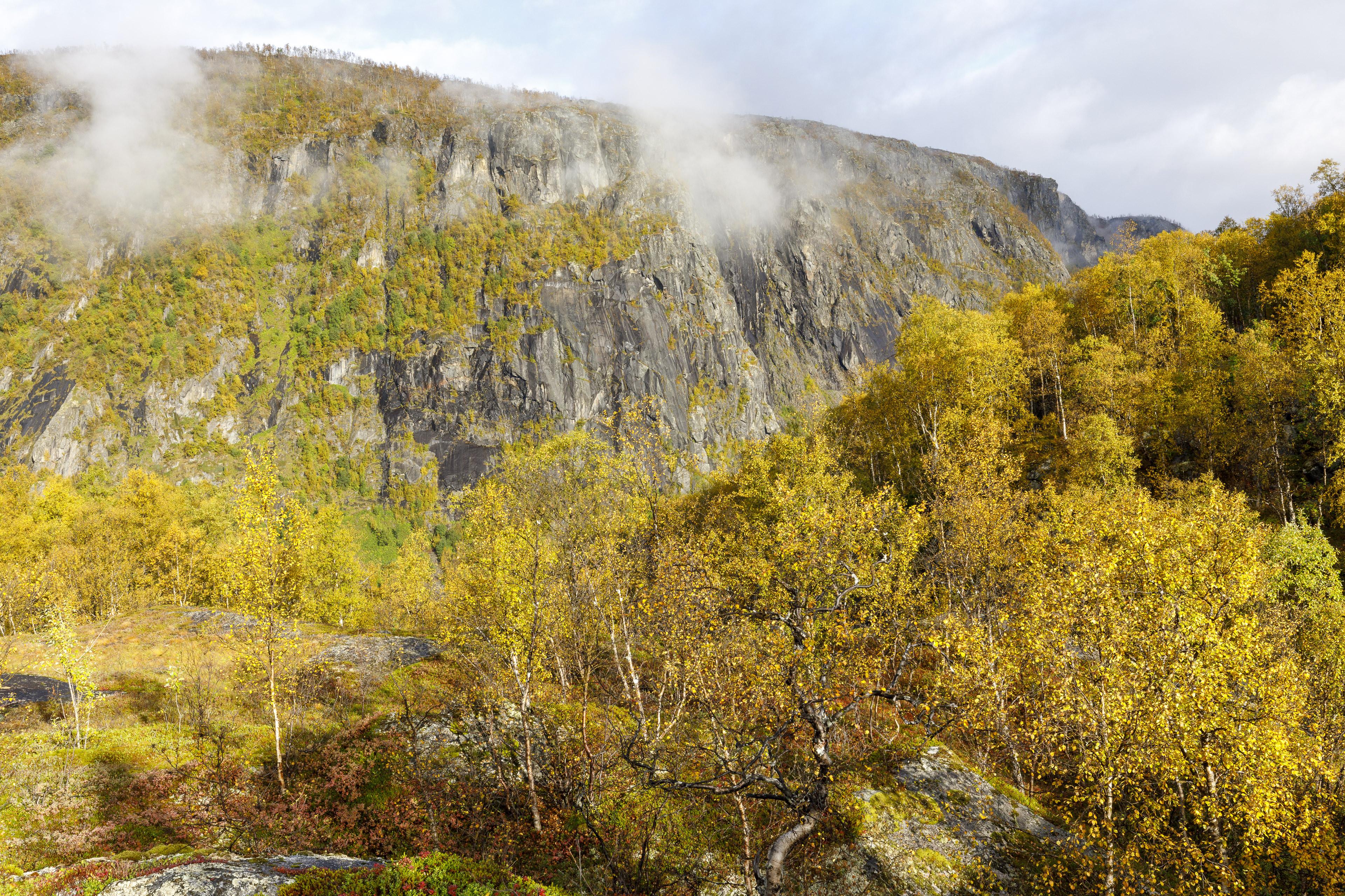 Herbstfärbung im Birkenwald,©Markus Proske—Canon EOS 5D Mark IV, EF16-35mm f/4L IS USM, 35mm, 1/60s, Blende 11, ISO 125